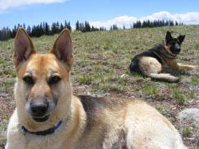 Draco and Leah in Gunnison Country sub-alpine habitat