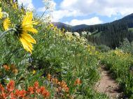 July is amazing... Rustler's Gulch, Elk Mountains
