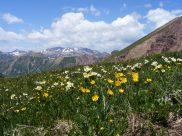 Elk Mountains in July