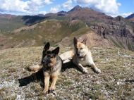 Leah and Draco grace the Elk Mountains