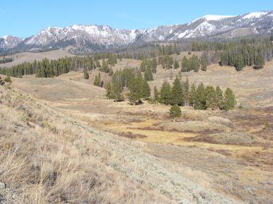 Northwest corner of Yellowstone National Park. Good wildlife habitat