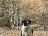 Lucky Dog, aka the Round Hound