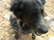 Lady Dog, aka Little Girl Dog