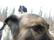 Lucky posing over Sheeba