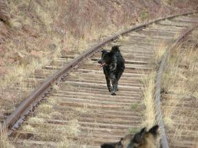 Lady Dog cruising along abandoned Denver and Rio Grande Western railroad tracks
