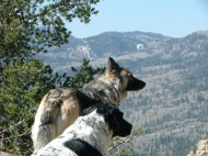 Sheba the Shepherd and Lucky Dog the Round Hound overlook the San Juans