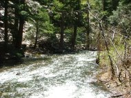 Cimarron river in Cimarron Canyon