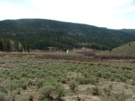 Sagebrush and willow in Razor Creek Park