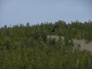 Thick forest surrounds Razor Creek Park
