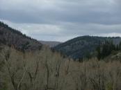 East Elk Creek looking upstream towards the north