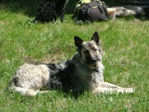 Sheba in our lunch meadow, my pack in the background