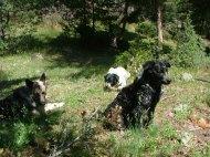 The three pack mates.