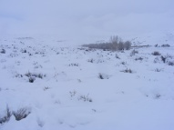 The elk are just to the left of the cottonwood grove