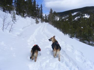 Leah (left) and Draco on the road above Gold Creek, setting out from the winter trailhead