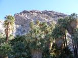 49 Palms Oasis, in Joshua Tree National Park