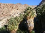 49 Palms Oasis deep in desert mountains
