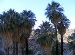 Water in the desert provides for a different habitat than the surrounding desert