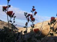 Desert dryness nonetheless has flowers