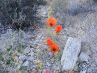 From the desert floor, metaphorical gems of orange