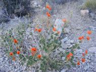 February and the desert blooms in color