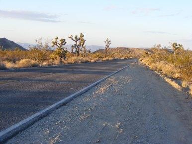 Within Joshua Tree National Park, the eponymous trees at dusk