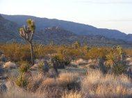 High desert at dusk