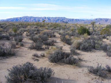 Vast desert highlands, miles to the erosion scarred ridge