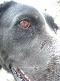 Self portrait courtesy of Lucky Dog