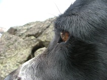 Lucky Dog, observant hound