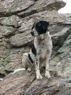 Lucky Dog on the rocks
