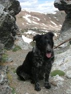 Lady Dog sits in the notch of Gunsight Pass