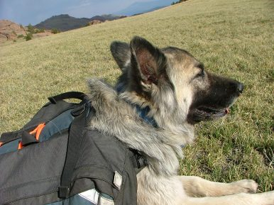Nearly 12,000 feet high, Sheba rests in the grass