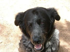 Lady Dog, aka Little Girl Dog, on the trail