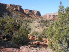Pinon, juniper and cottonwoods under the sheer cliffs