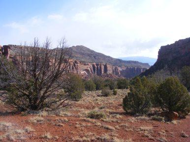 Sparse desert vegetation