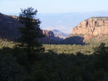As dusk approaches; the canyon and its carpet of trees