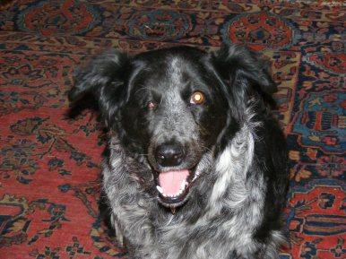 Lady Dog attentive