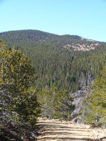 Conifer forest near 10,000 feet
