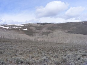 One of the aspen groves under the east rim of Flattop