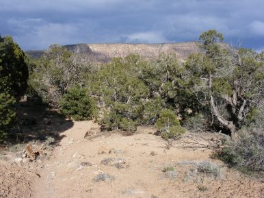 Above the junipers is the horizontal banding of the sandstone the composes the eastern rim of the Gunnison Gorge near the Ute Trail