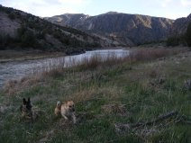 Leah and Draco romp near the Gunnison River within the gorge of the same name. Long Gulch is the drainage from the left background