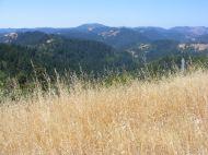 Dry grass and verdant hillsides