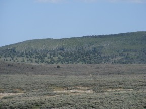 The north side of Stuntz Ridge has cool, green aspen