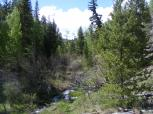 Sheep Creek runs through it.... young lodgepole pine on right