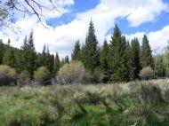 Ah, June in the Rockies! East Sheep Creek