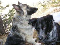Sheba and Lady Dog await the next activity