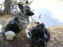 Sheba and Lady Dog on the shore of Mill Lake