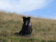 Lady Dog atop the ridge between Mill and Lamphier Lakes