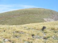 Bighorn sheep on the grassy ridge above Mill Lake
