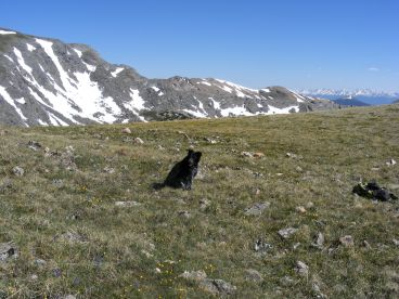 Lady Dog high up in the Fossil Ridge area